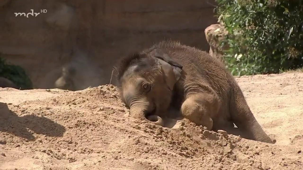 Poolparty fürs Elefantenbaby