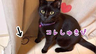 飼い主のヘアゴム大好きで大興奮の黒猫ナナちゃん