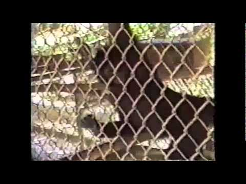Ft Sherman Part 4 The Zoo