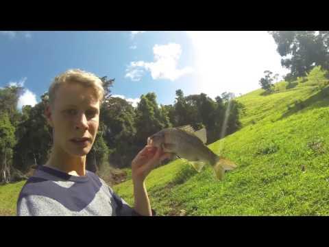 Bass Fishing Northern Rivers Nsw