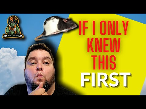 Watch This First Before You Start Breeding Feeder Rats!
