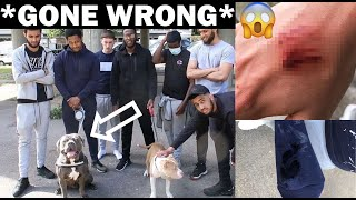 LAST PERSON STANDING WINS £1000 *DOG EDITION*
