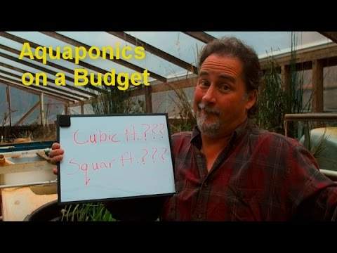 Aquaponics on a budget (Fish to Plant Ratio)