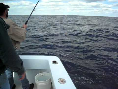 Sailfish - Forida - Gotcha Charter