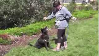 Positive Approach Canine Education (pace)