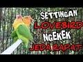 Membuat Lovebird Ngekek Jeda Rapat Settingan Lovebird Gacor  Mp3 - Mp4 Download