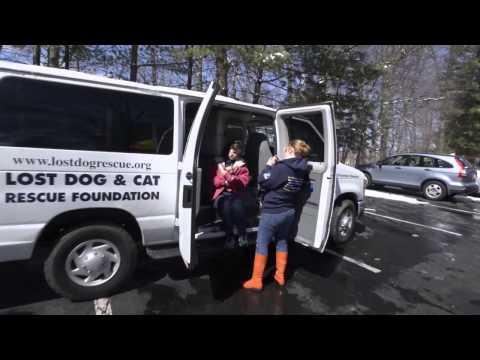 55 Rescued Arkansas Dogs Begin New Lives