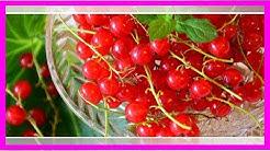 Rote Johannisbeere: Leckere Rezepte mit den Beeren