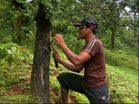 Herbal Veterinary Medicine Part 1(Kannada) -ಗಿಡಮೂಲಿಕಾ ಪಶು ಚಿಕಿತ್ಸೆ ೧