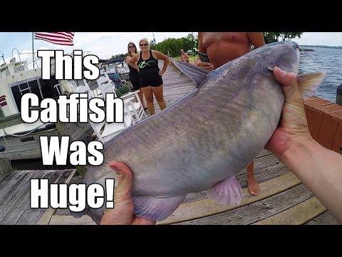 PB Blue Catfish, He Was HUGE - Chesapeake Bay Fishing