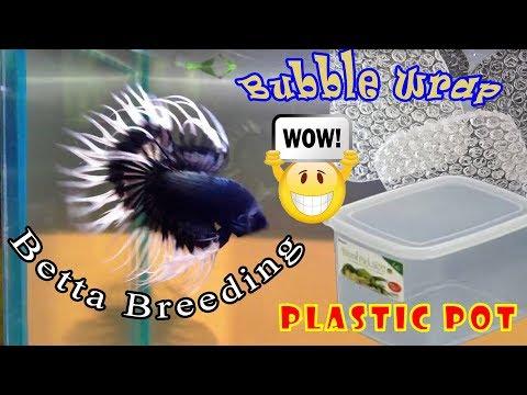 Very easy to make a breeding betta pot ... EASY - Easy - EaSy :O