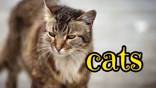 Urban Wildlife. Cats  | Documentary | Science Channel