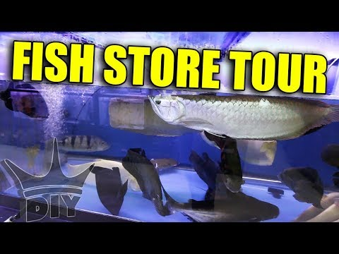 MONSTER AQUARIUM - Fish Store Tour