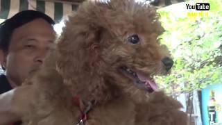 Cách nuôi chó cảnh ai cũng phải biết nếu muốn nuôi chó cảnh - Tin Tức Mới
