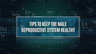The male reproductive system is one of most important parts body and maintaining good health essential to sexual development p...