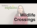 What are Wildlife Crossings?