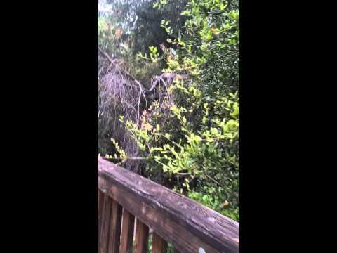 Stonecliffe-Walk across the bridge, thru the park to Wagon Wheel Elementary School