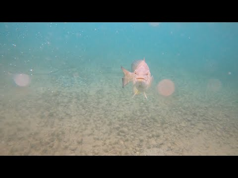 Snorkeling In Traverse Bay And Attacked By A BASS!!