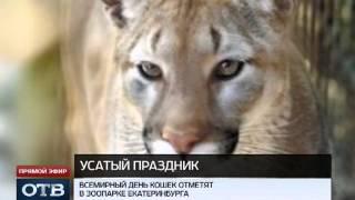 Всемирный день кошек отметят в Екатеринбурге