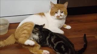 Особая техника массажа от кота Бориса.