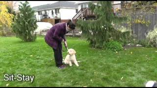 Niagara Dog Training - Novice Obedience Week 2: Dave & Vic Training Megs