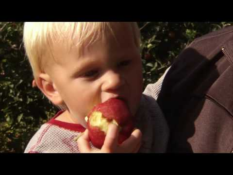 Peaches, Cranberry, Harvest, Maple Syrup, Strawberry - America's Heartland