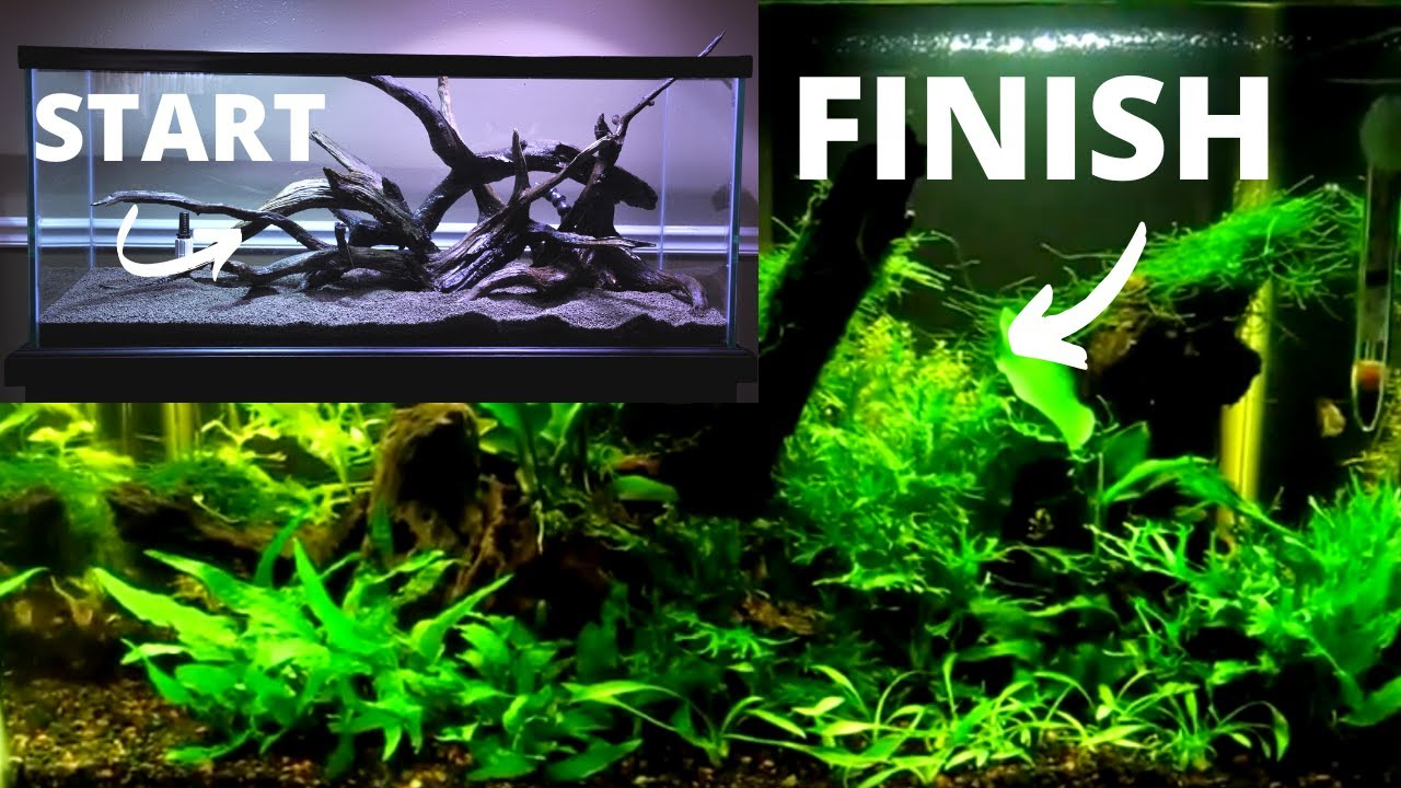 How To Set Up A Fish Tank: Freshwater Planted Aquarium ...