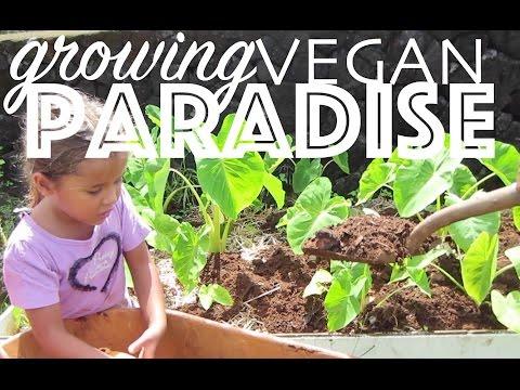 Growing Vegan Paradise - Our Garden in Hawaii + VLOG