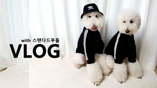 스탠다드푸들│ 봉드레장인이 한땀한땀 만든  아디다스 트…