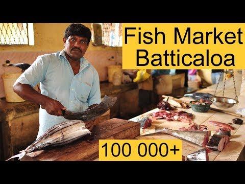 Fish Market Batticaloa Sri Lanka