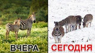 Аномалии в АФРИКЕ которые пугают животных и людей!