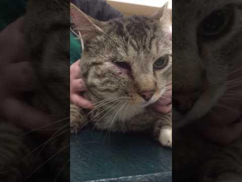 Cat Bite Abscess, Face