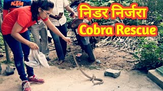देखे कहा बैठा था यह नाग.. Cobra: Venomous rescue by Nirzara Chitti