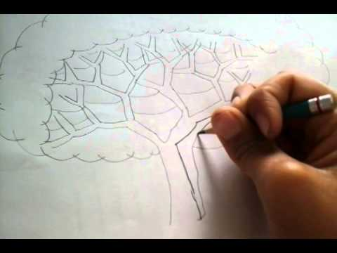 Como Dibujar Un Arbol Paso A Paso Youtube