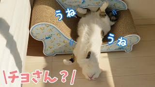 暑くてまさかの場所で爆睡してしまう猫