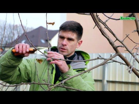 Как обрезать яблоню осенью видео