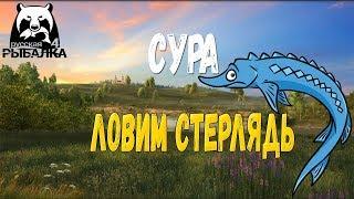 РОСІЙСЬКА РИБАЛКА 4 - СУРА, ЛОВИМО СТЕРЛЯДЬ!