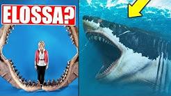 Onko kaikkien aikojen vaarallisin hai elossa?