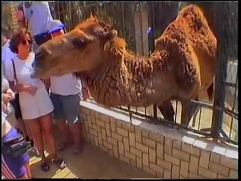 Funny Zoo trip to Tozeur, Tunisia 1999