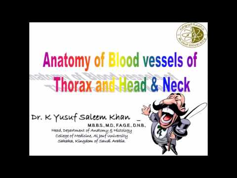 Anatomy Lecture - Blood Vessels of the Thorax and Head & Neck........ by Dr. Yusuf