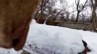 Dogs' Point Of View - Garmin Virb
