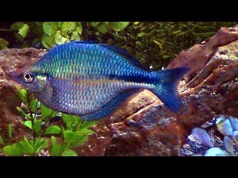 My 90 Gallon Freshwater Fish Aquarium