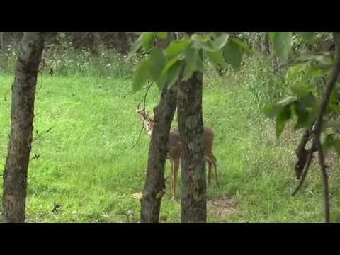 Deer hunting (GRAPHIC)
