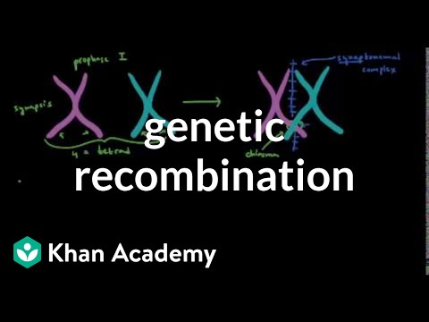 Genetic recombination 1 | Biomolecules | MCAT | Khan Academy
