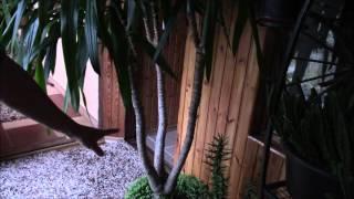 Юкка комнатная.  Уход за юккой.  Фильм 3.(Юкка комнатное растение. Что любит юкка?Хотя юкка неприхотливое растение, но у него есть требования к почве..., 2016-04-26T17:14:41.000Z)