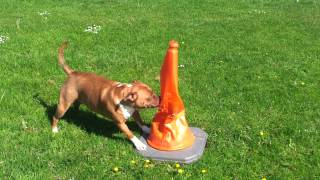 Dangerous Dog Training