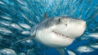 Top cinco filmes de tubarão!