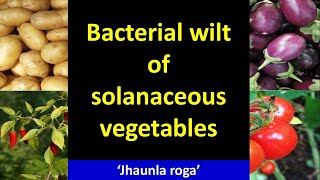Bacterial Wilt of Solanaceous Vegetables (Ralstonia solanacearum)