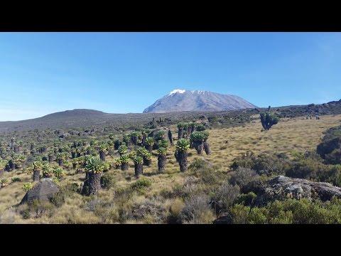Climbing Kilimanjaro, Marangu Route, Tanzania