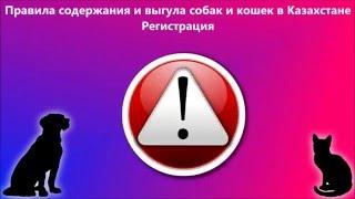 Правила содержания и выгула собак и кошек в Казахстане. Регистрация